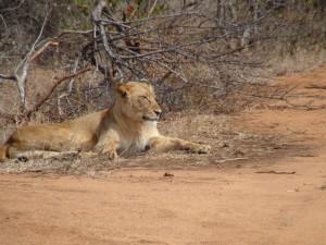 Gary-Mabbutt-Kruger-National-Park-011