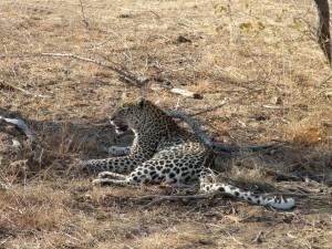 Gary-Mabbutt-Kruger-National-Park-013