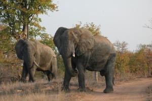 Gary-Mabbutt-Kruger-National-Park-02