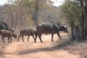 Gary-Mabbutt-Kruger-National-Park-04