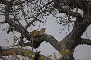Gary-Mabbutt-Kruger-National-Park-05