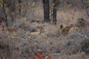 Gary-Mabbutt-Kruger-National-Park-06