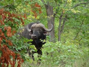 Gary-Mabbutt-Kruger-National-Park-07