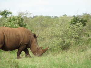 Gary-Mabbutt-Kruger-National-Park-08