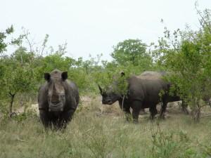 Gary-Mabbutt-Kruger-National-Park-09