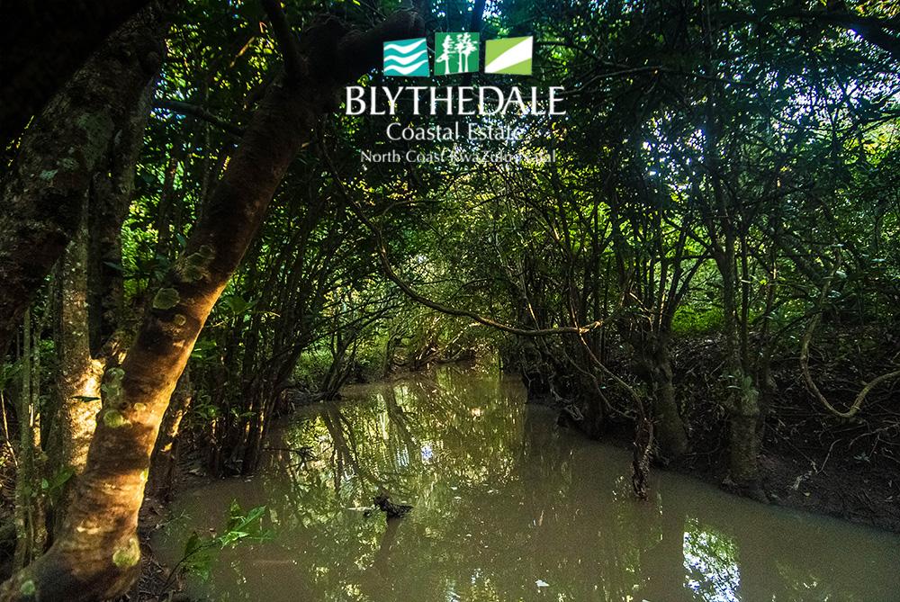 Nature in Blythedale Coastal Estate