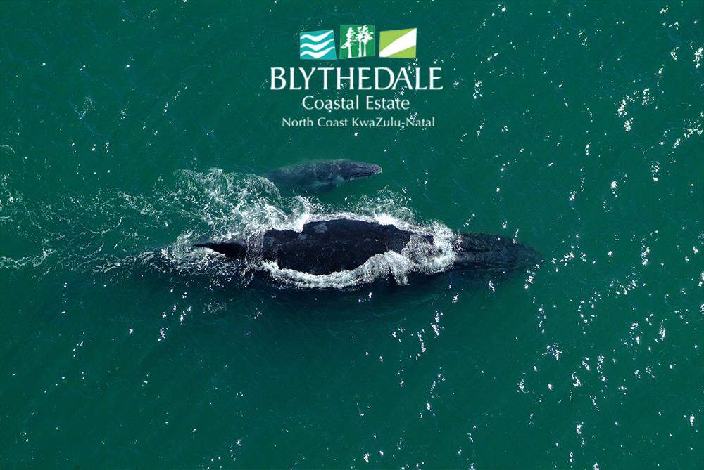 Ocean pictures at Blythedale Coastal Estate